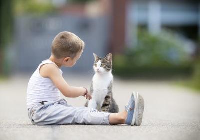 rasy kotów dla dzieci