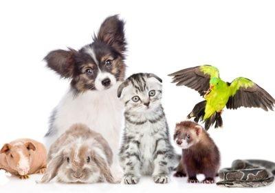 Zwierzę dla alergika